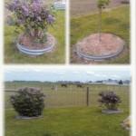 3_Landscape_Rings